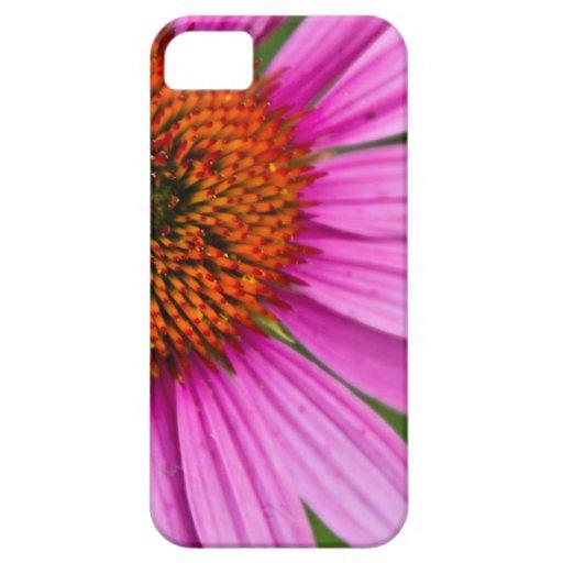 Cornflower púrpura iPhone 5 coberturas