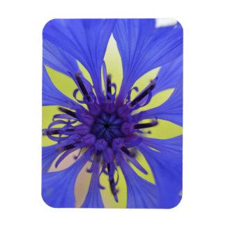 cornflower rectangular photo magnet