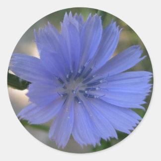 Cornflower Sticker