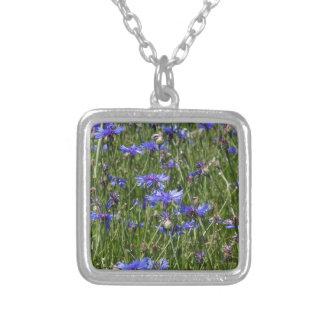 Cornflowers azules en un campo collar plateado