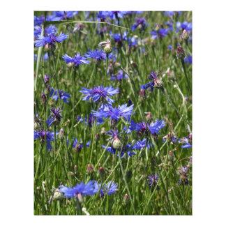 Cornflowers azules en un campo membrete
