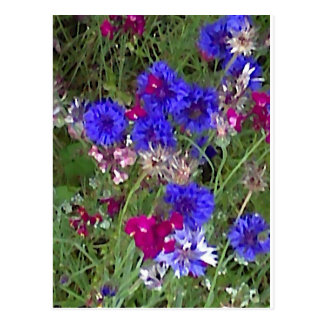 Cornflowers in the Wild Postcard