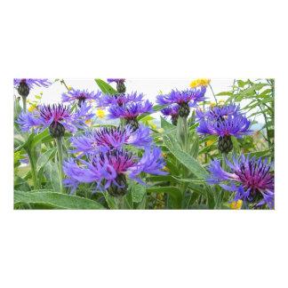 Cornflowers Photo Card