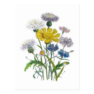 Cornflowers Postcard