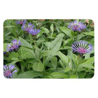 Cornflowers Premium Magnet
