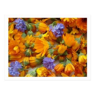 cornflowes and calendula postcard