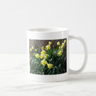 Cornish Daffodils (5867) Classic White Mug 11oz