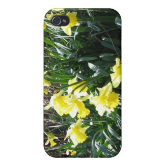 Cornish Daffodils Speck iPhone4 Case Cover For iPhone 4