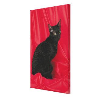 Cornish rex cat stretched canvas prints