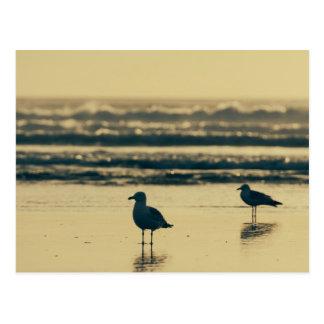 Cornish Seagulls Postcard