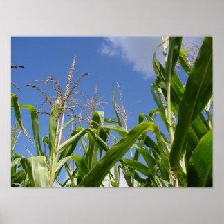 Corny sky print