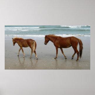 Corolla s Horses Poster