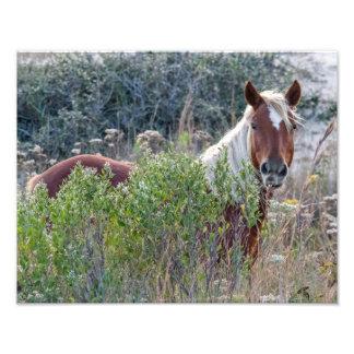 Corolla Wild Horse Photo Art