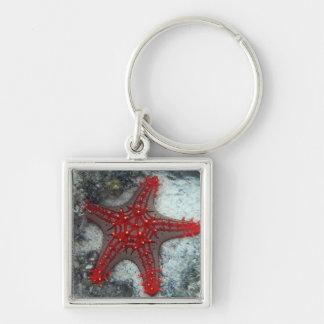 Corona de las estrellas de mar de las espinas en llavero cuadrado plateado