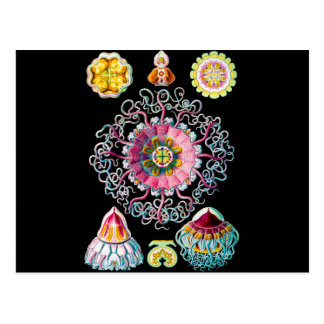 Corona o medusas del casco tarjeta postal