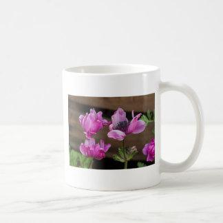 coronaria de la anémona en el jardín taza