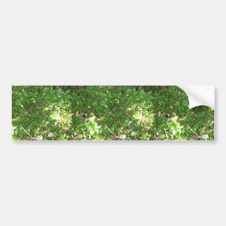 Coronaria franjada, remiendo del polypetala de Sil Pegatina Para Auto