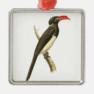 Coronated Hornbill Bird Illustration Metal Ornament