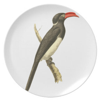 Coronated Hornbill Bird Illustration Party Plate