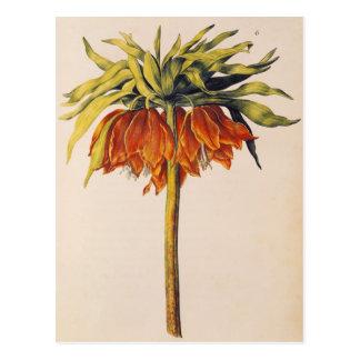 Corone el Fritillary, de 'La Guirlande de Julie' Postales