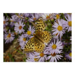 Coronis Fritillary on Aster Flowers at Grand Teton Poster