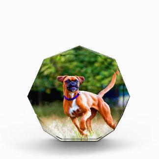 Corra a mi estimado perro del boxeador del amor