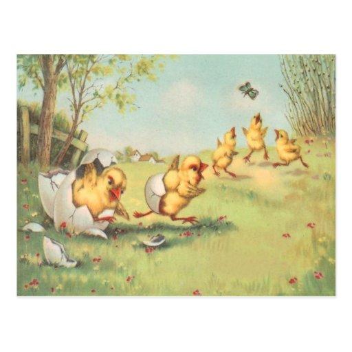 Corral de la mariposa del polluelo de Pascua Tarjeta Postal