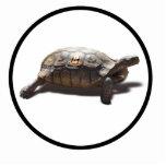Corredor #8 de la tortuga escultura fotografica
