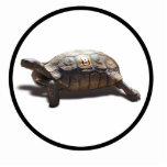 Corredor #8 de la tortuga esculturas fotograficas