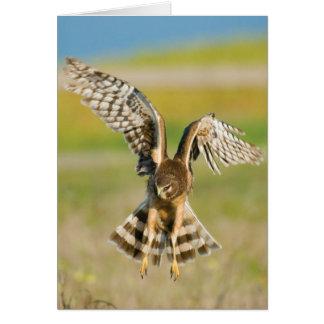Corredor de cross de la caza tarjeta de felicitación