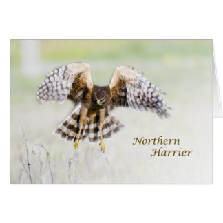 Corredor de cross septentrional tarjeta de felicitación