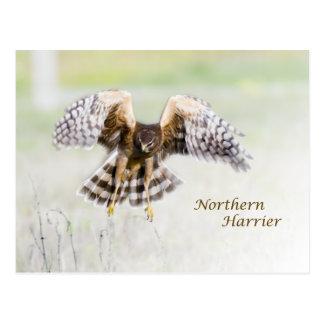 Corredor de cross septentrional tarjetas postales