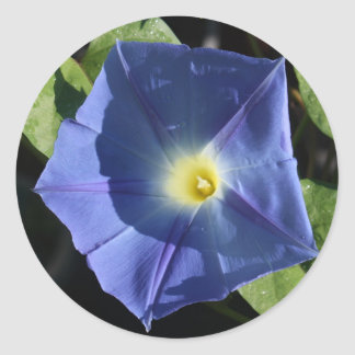 Correhuela azul divina pegatina redonda