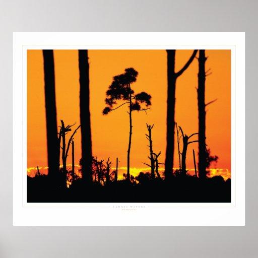 Correhuela: Salidas del sol #x111010 de la Florida Posters