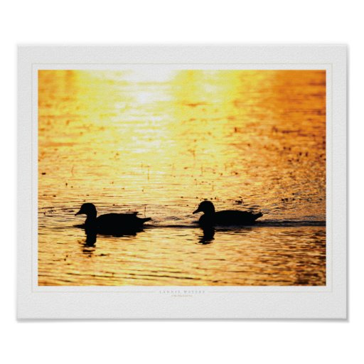 Correhuela: Salidas del sol #x111910 de la Florida Póster