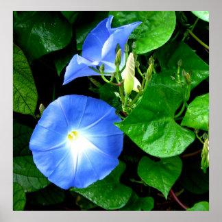 Correhuelas azules divinas póster