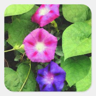Correhuelas rosadas y púrpuras calcomania cuadradas