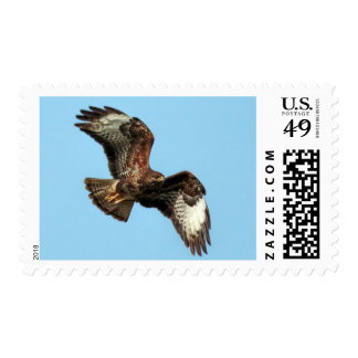 Correo común del rapaz del halcón timbres postales