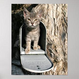 Correo del gatito poster