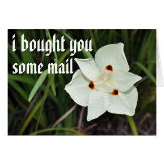 correo tarjeta de felicitación