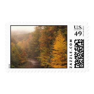 Corriente Berkshires del otoño del arroyo del Franqueo