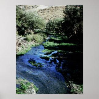 Corriente cubierta de musgo en San Joaquin Valley  Póster