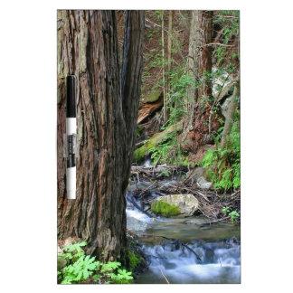 Corriente de la secoya del árbol tablero blanco