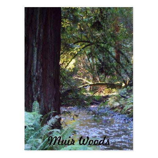 Corriente de maderas de Muir Postal