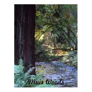 Corriente de maderas de Muir Tarjeta Postal