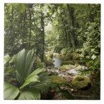 corriente en la selva tropical, Dominica Azulejo Cerámica