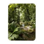 corriente en la selva tropical, Dominica Imanes Rectangulares
