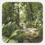 corriente en la selva tropical, Dominica Colcomanias Cuadradases