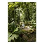 corriente en la selva tropical, Dominica Tarjeta