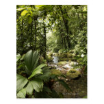 corriente en la selva tropical, Dominica Tarjetas Postales